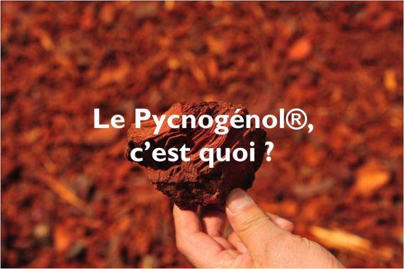 Le Pycnogénol®… C'est quoi ?