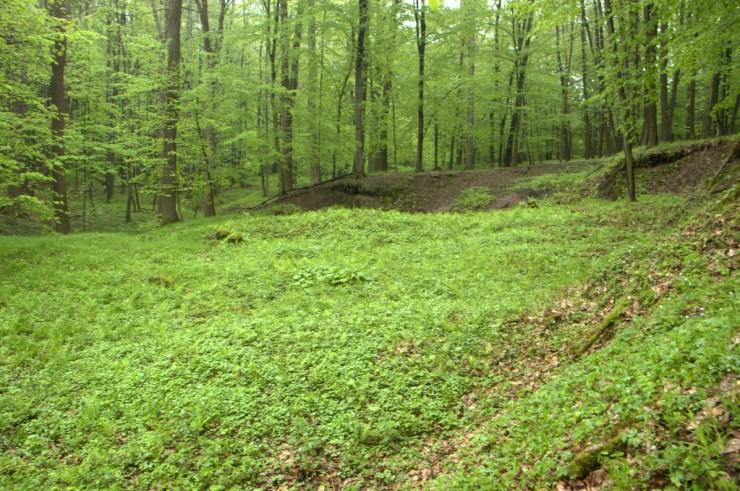 Sesuvy v podsvahových polohách jsou často způsobeny kombinací narušení erozní báze vodním tokem a podmáčením podsvahovými prameništi.