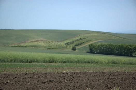 Intenzívně zemědělsky využívaná krajina v okolí Šardic.