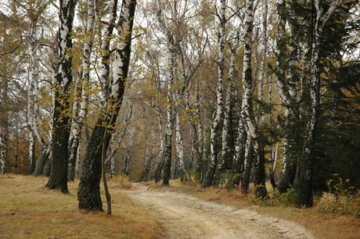 Cesta na Královci.