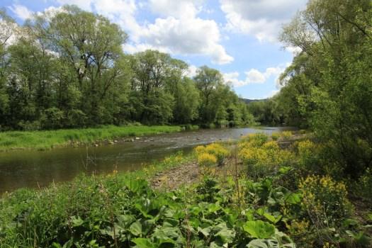 Řeka Olza u Bystřice ve Slezsku.