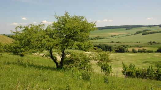 Údolí Litavy na středním toku u Nevojic.
