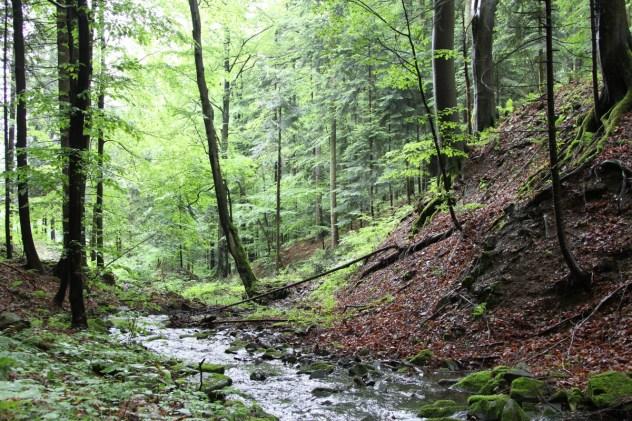 Lesní společenstva úzkých zaříznutých údolí (jasanové javořiny), lokalita: Malé Karlovice, Ráztocká hornatina, PLO 41, SKT 5U.