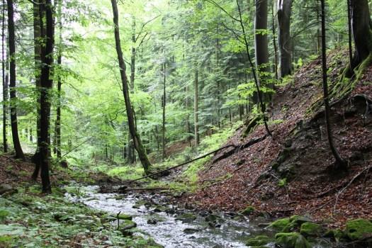 Lesní společenstva úzkých zaříznutých údolí.