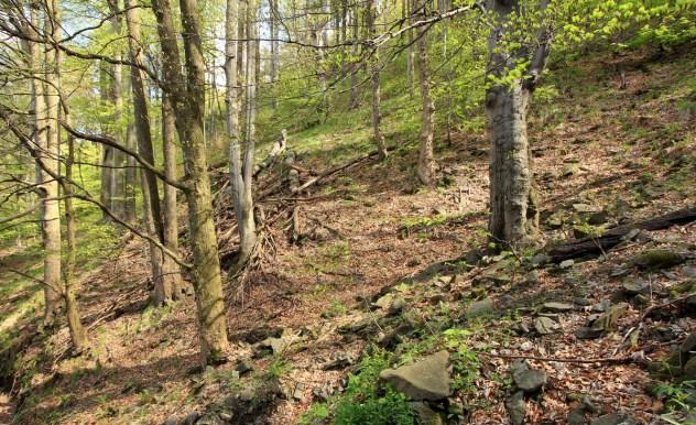 Horská klenová bučina na úbočí Lysé hory (PR Zimný potok).