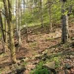 Horské klenové bučiny (Svaz Fagion sylvaticae)