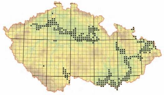 Rozšíření tvrdých luhů nížinných řek v ČR.