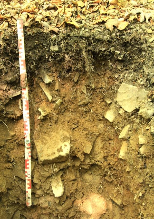 Kambizem rankerová melanická (KAsn), lokalita: NPR Mionší, Moravskoslezské Beskydy, PLO 40, SLT 5B).