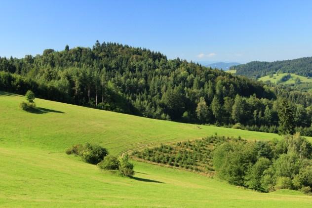 Podhorská krajina Pulčínské hornatiny, lokalita: Nad Francovou Lhotou.