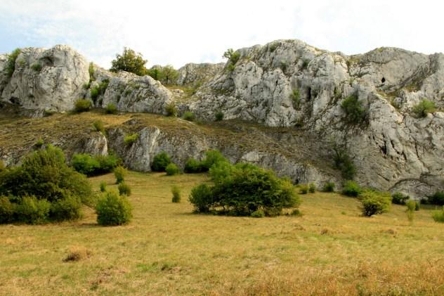 Společenstva skalních stepí svazu Seslerio-Festucion pallentis (lokalita: Skály nad soutěskou, Pavlovské vrchy, PLO 35).