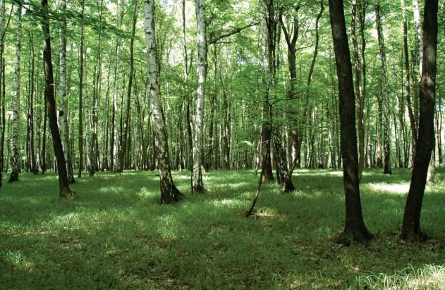 Společenstvo karpatských dubohabřin s podrostem ostřice chlupaté (Carex pilosa), lokalita: Uherskobrodsko, Prakšické pahorkatina, PLO 38, SLT 3H.