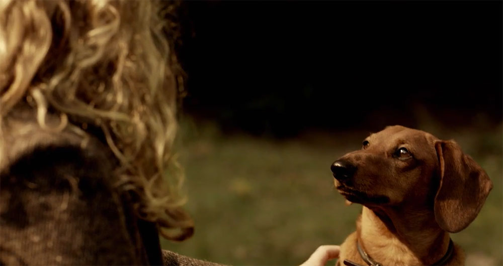 Good Boys of Horror: Top 10 Canine Companions - Morbidly Beautiful