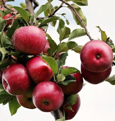 Magdalenas de manzana y zanahoria