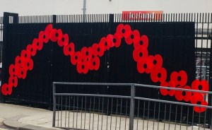Morecambe giant poppies