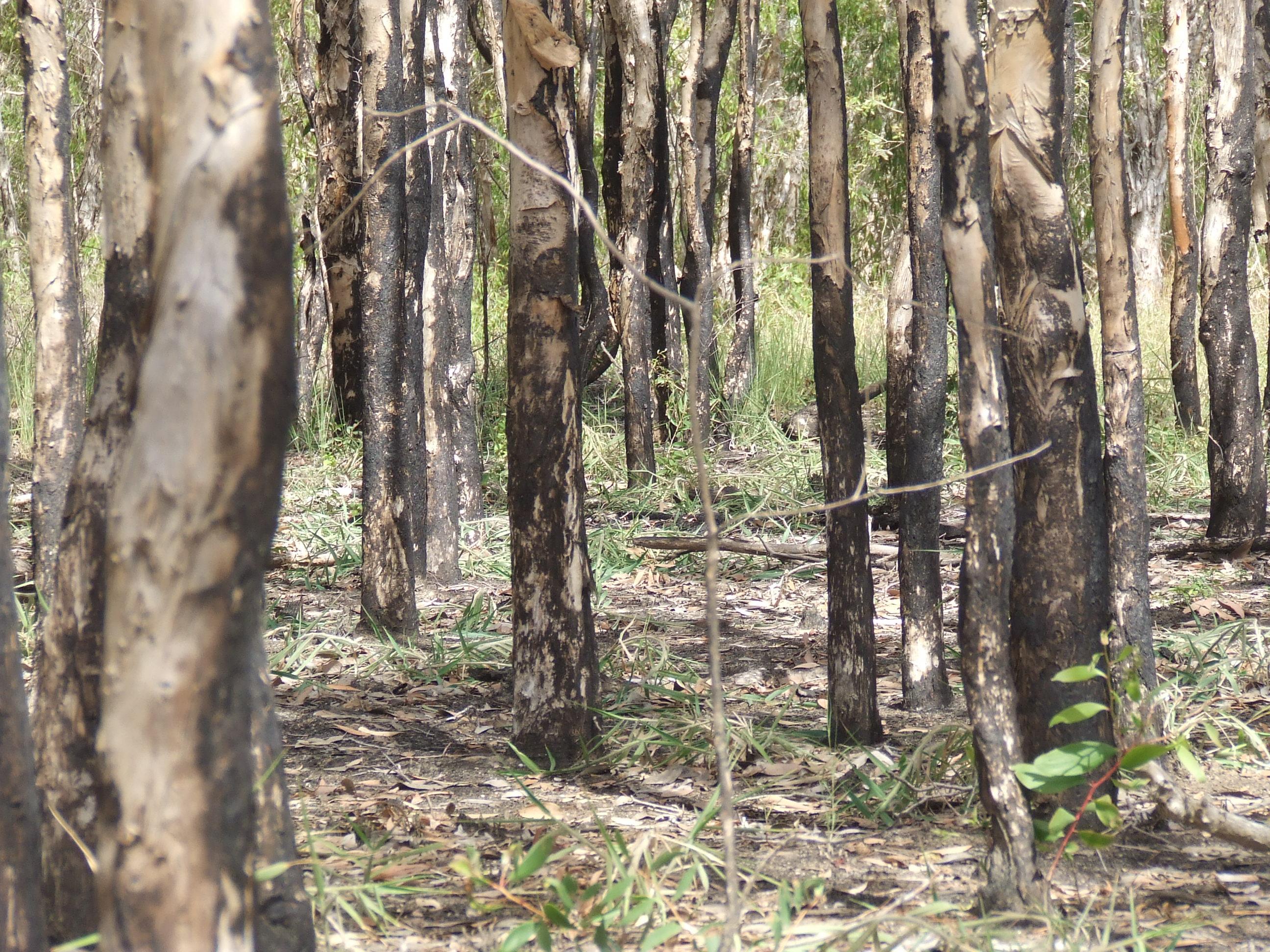 2008_1201swamptrees0006