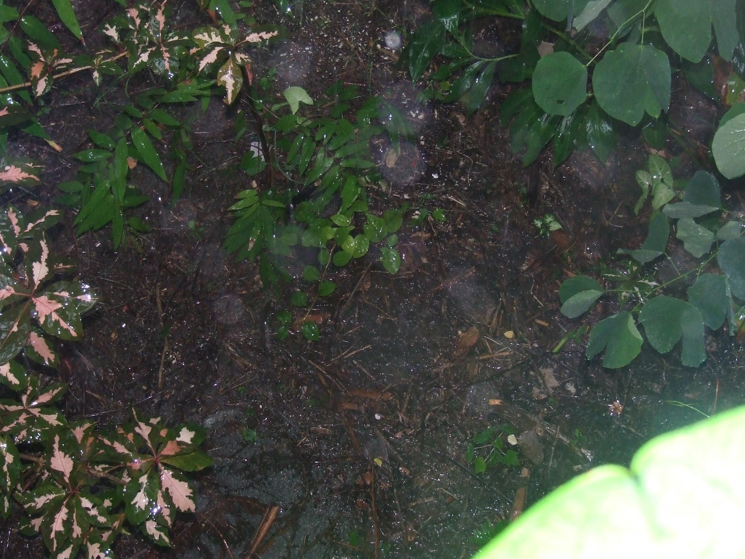 garden-puddle