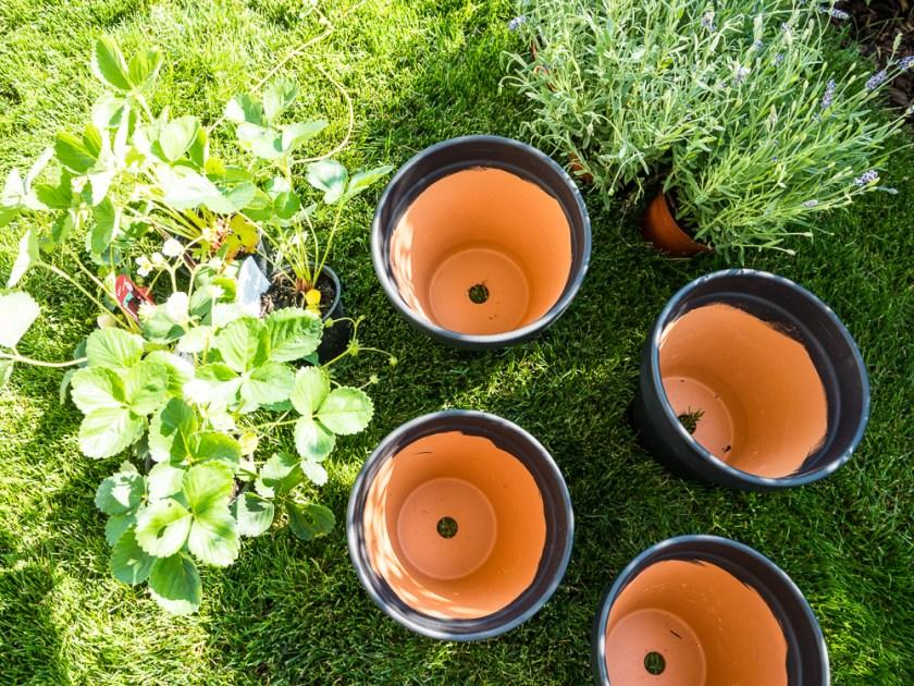 Tontöpfe-Tafellack-Erdbeerpflanzen-Lavendel