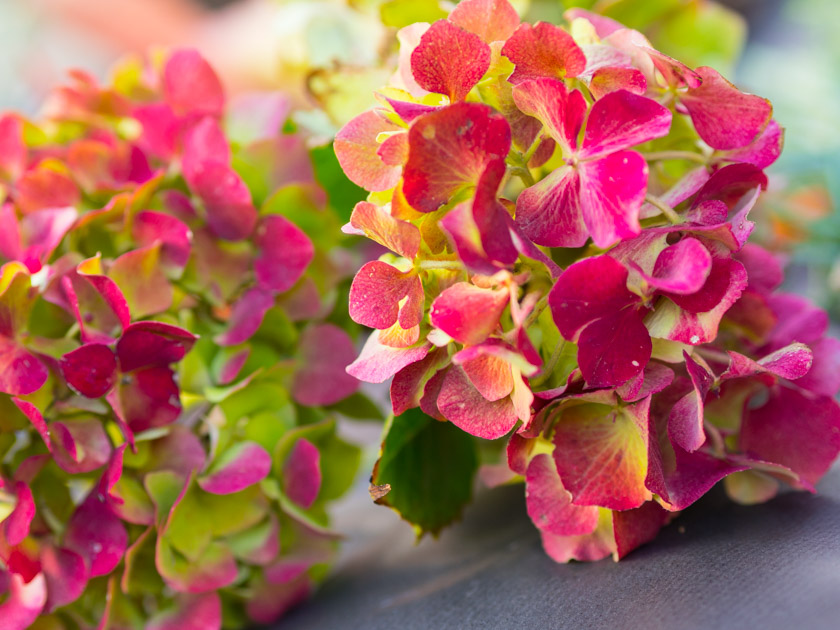 DIY Kränze binden mit Naturmaterialien Hortensien