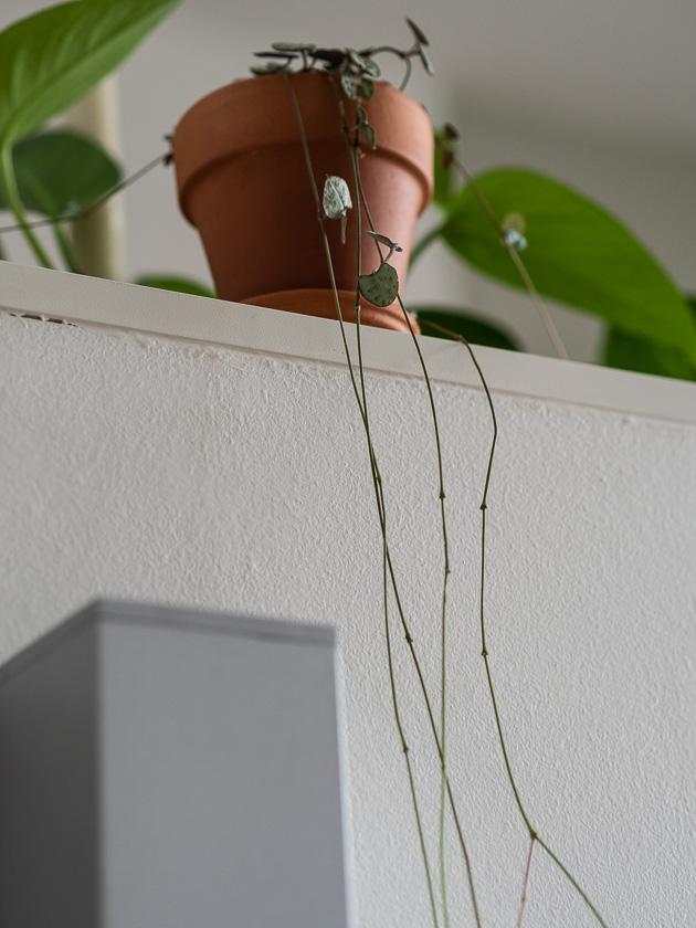 Urban Jungle Trend an Wand_Pflanzen