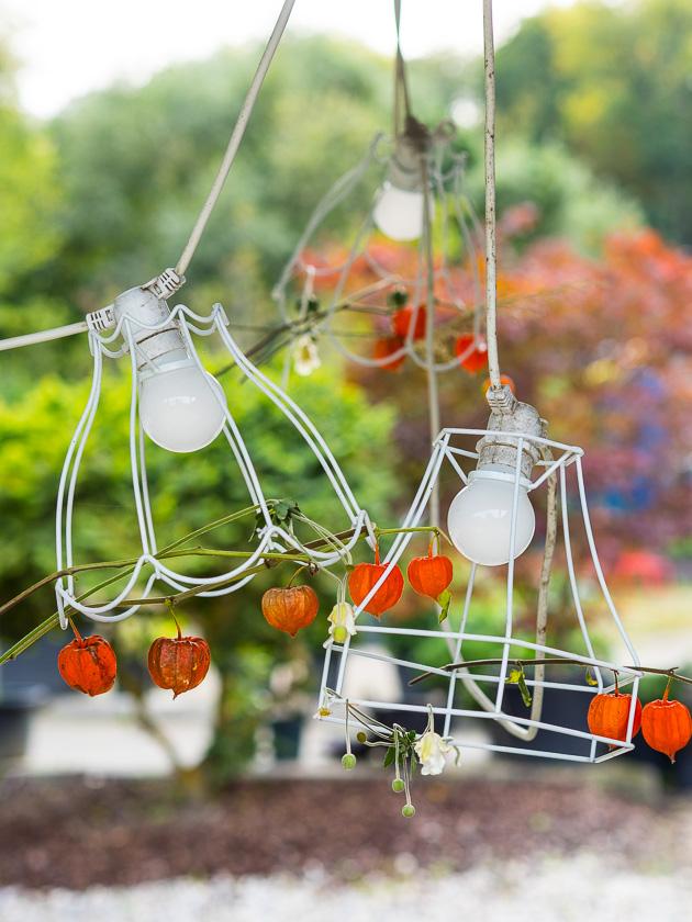 Gartenträume für Familien_Lampionblume