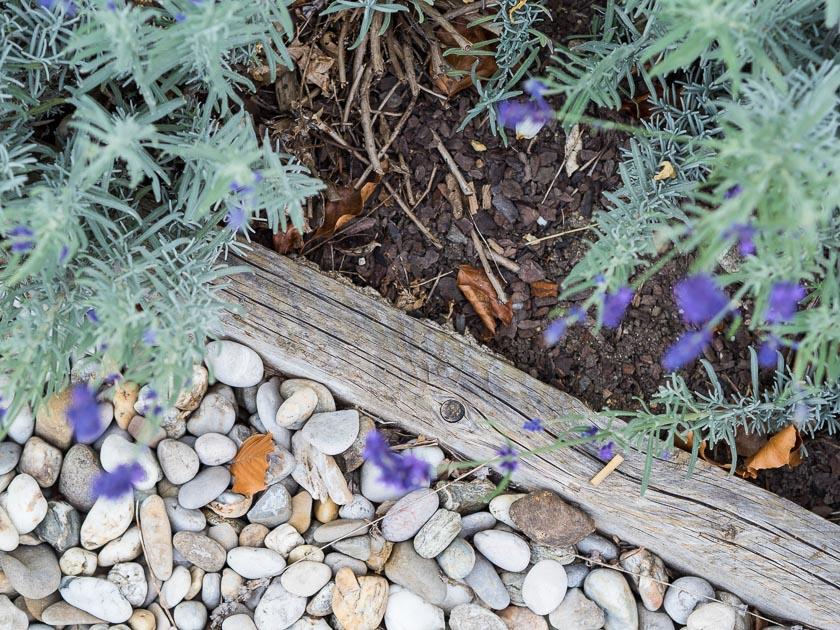 Gartenträume für Familien_Rasenkante