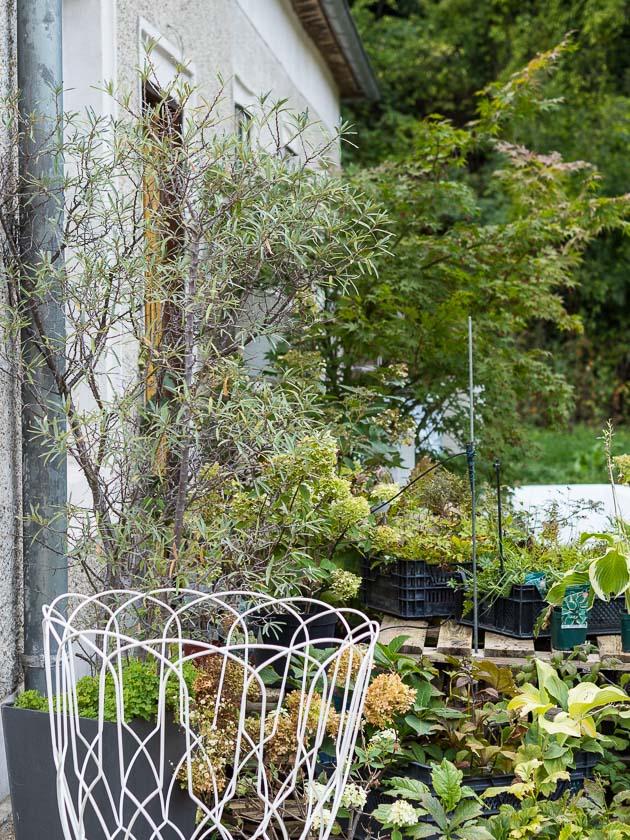 Gartenträume für Familien_Bauernhaus