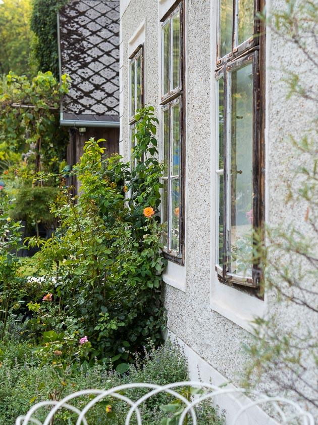 Gartenträume für Familien_Kletterrose