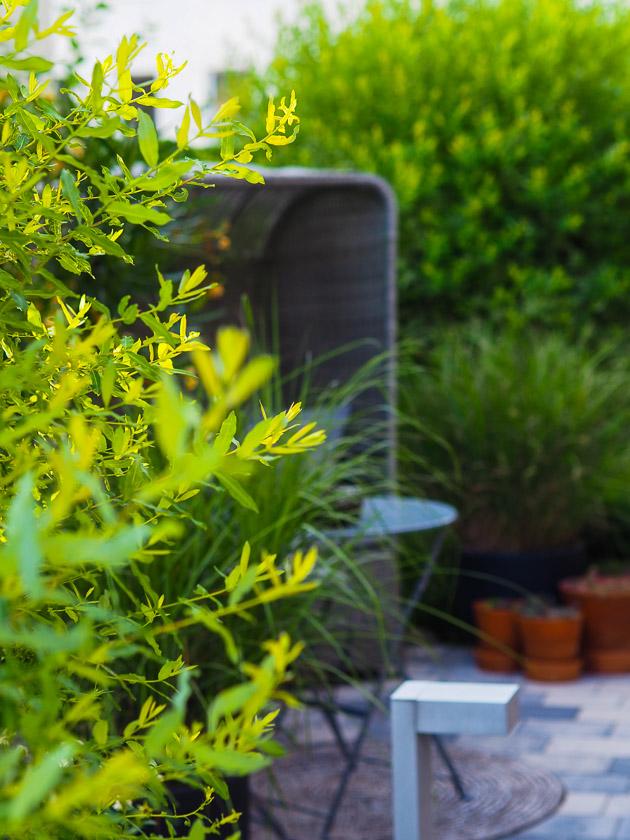 Familiengarten für Faule_Küchengarten