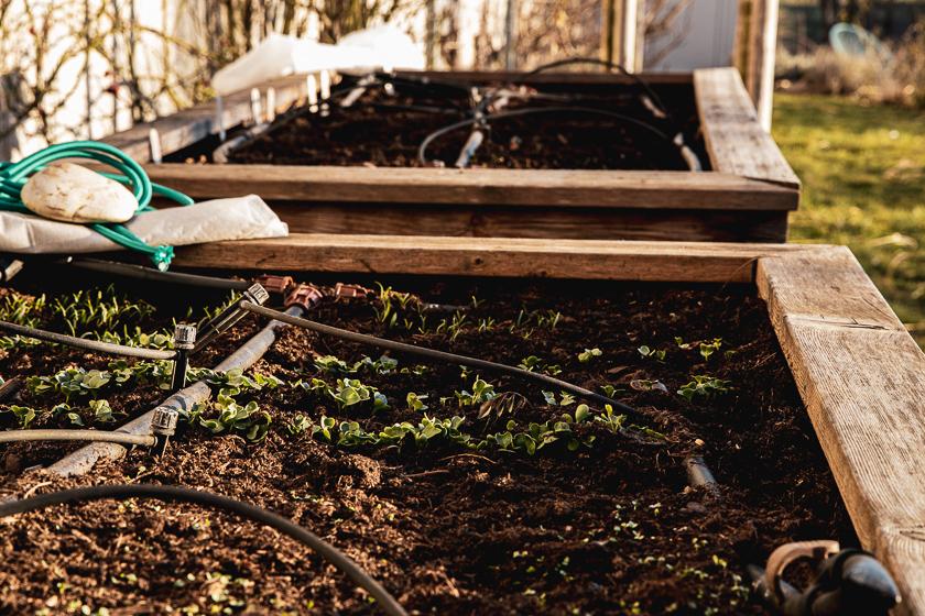Kleiner Gemüsegarten Bepflanzungsplan