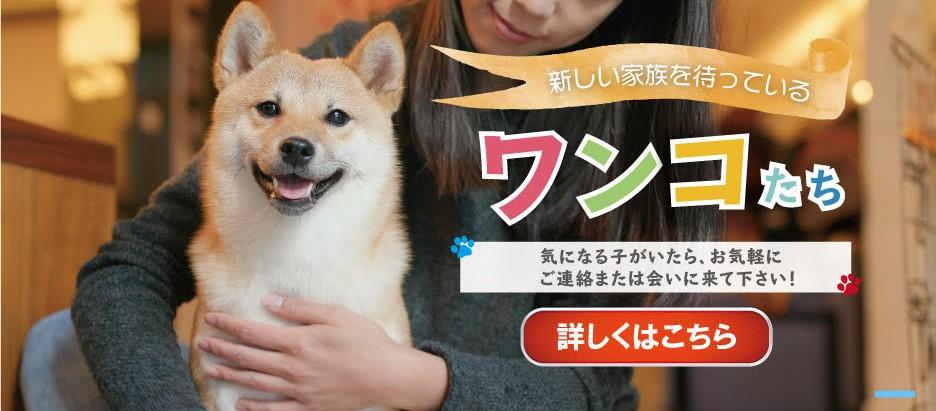 ふるさと納税を利用して保護犬を助けよう!