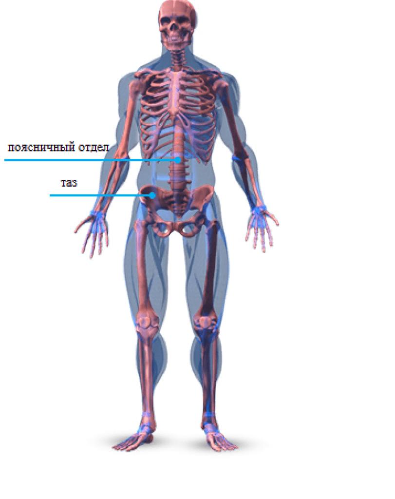 összeroppant a csípő lábfájdalma az érrendszeri artrózis kezelése