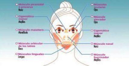 Esquema de músculos orofaciales en relación con la estética facial en acción simétrica