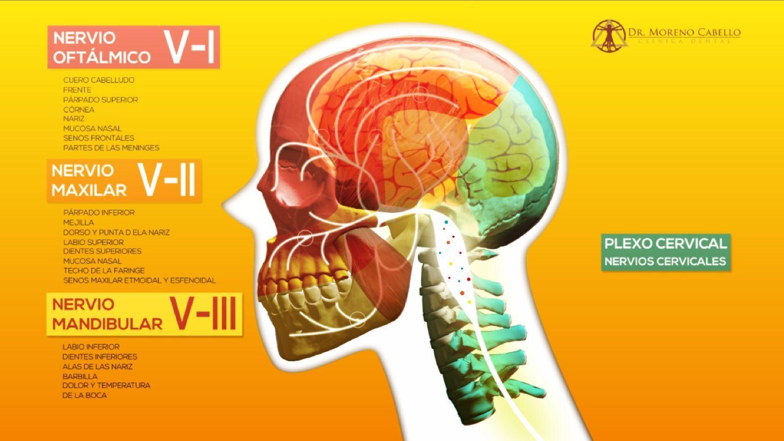 Patología traumática de la dinámica mandibular - Clínica Dental ...