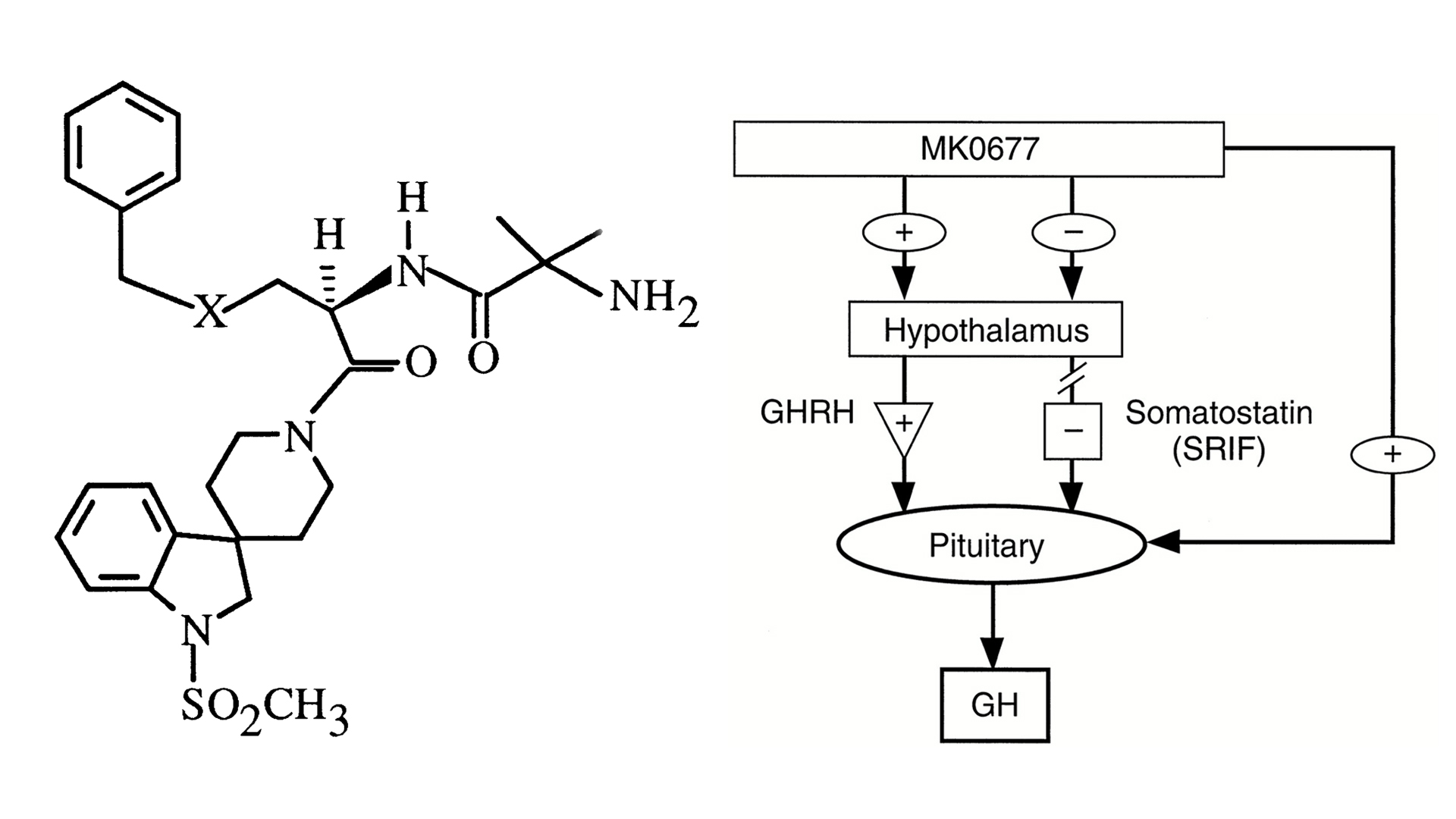 MK-677 Ibutamoren Chemical Structure And Mechanism Of Action