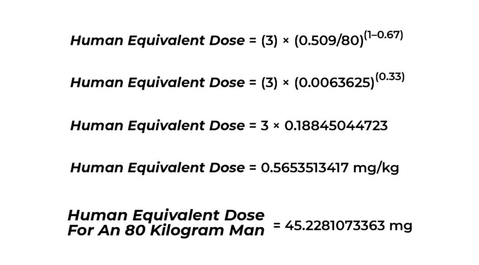 computation human equivalent dose