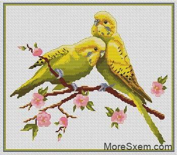 Желтые попугайчики