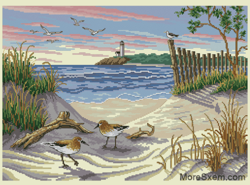 Чайки и пляж
