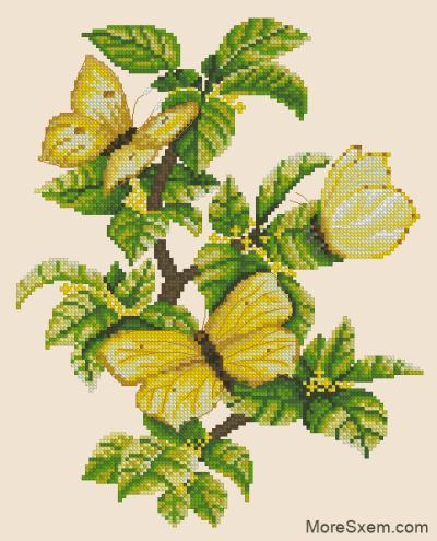 Бабочки на крушине