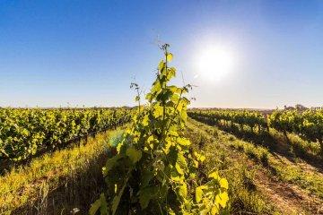 Stellar Organic Winery Western Cape