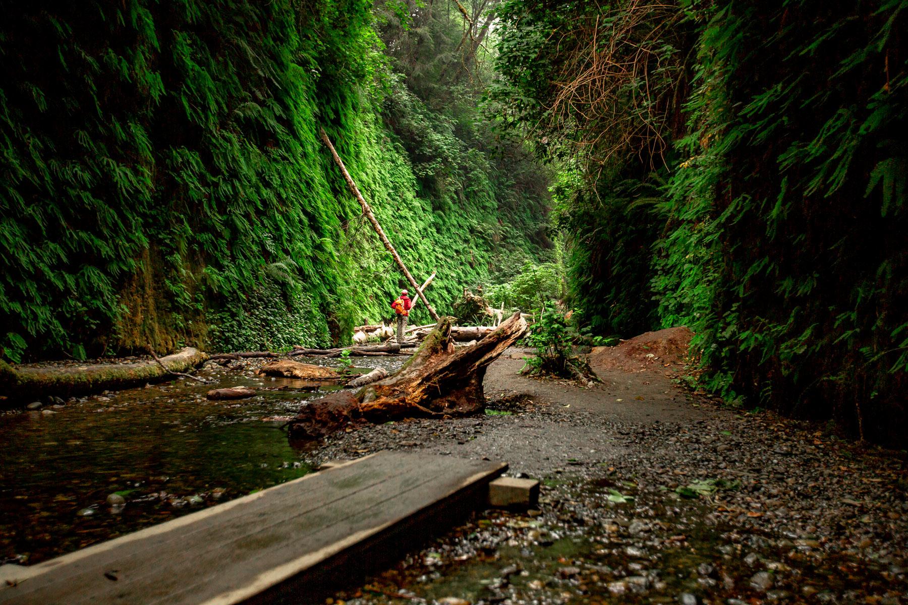 fern canyon redwood national park