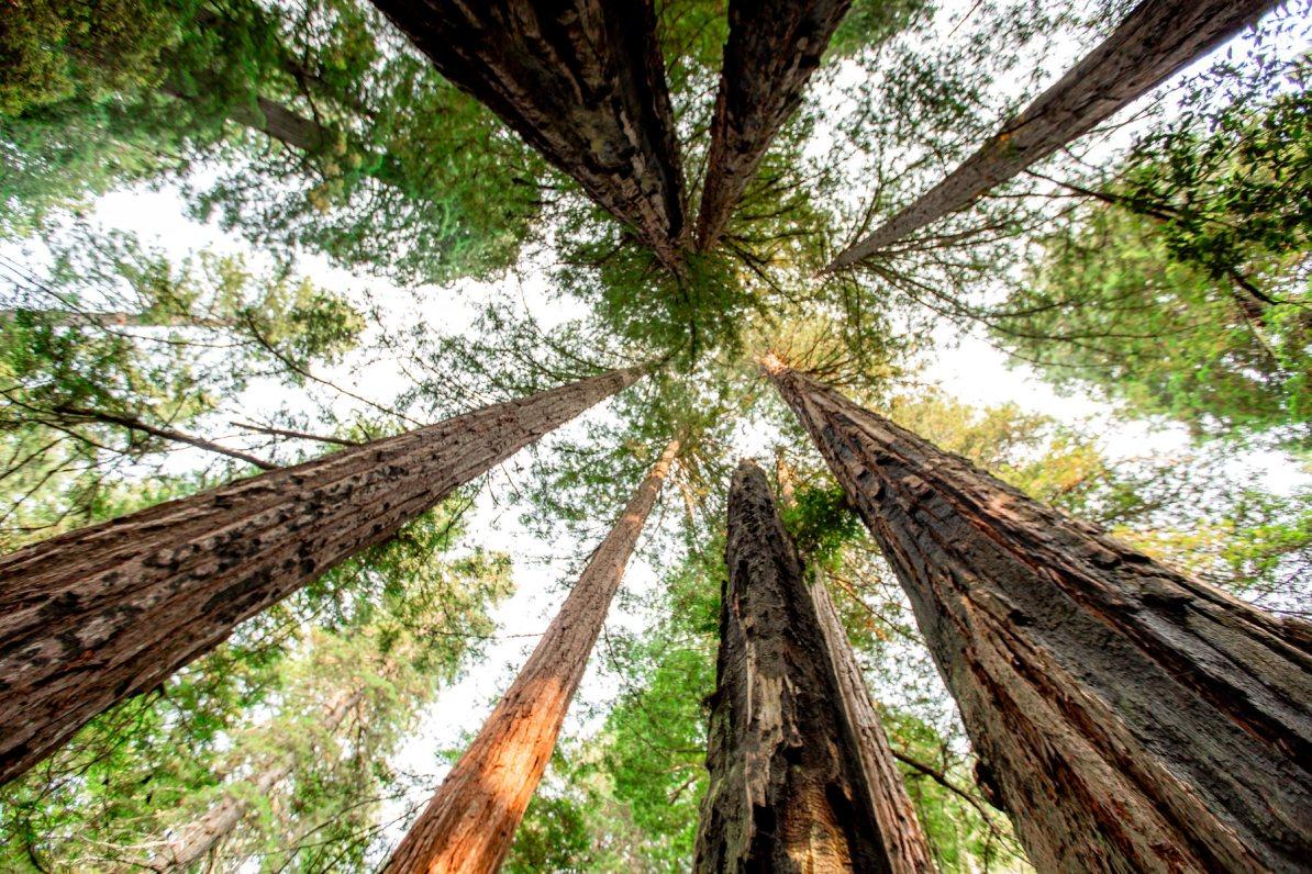 Redwood National Park trees