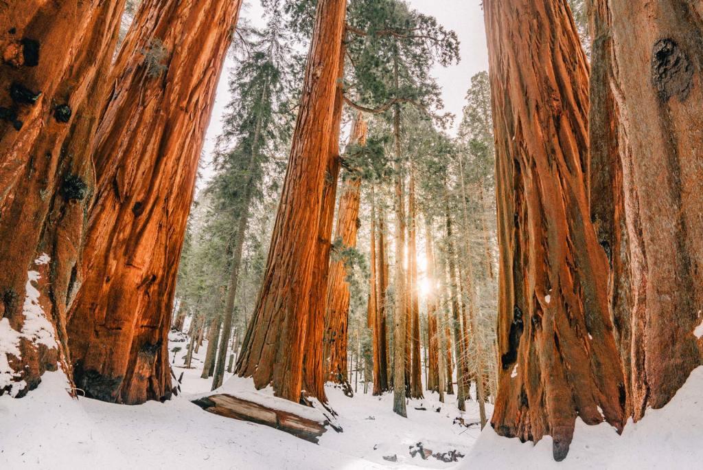 sequioa national park california