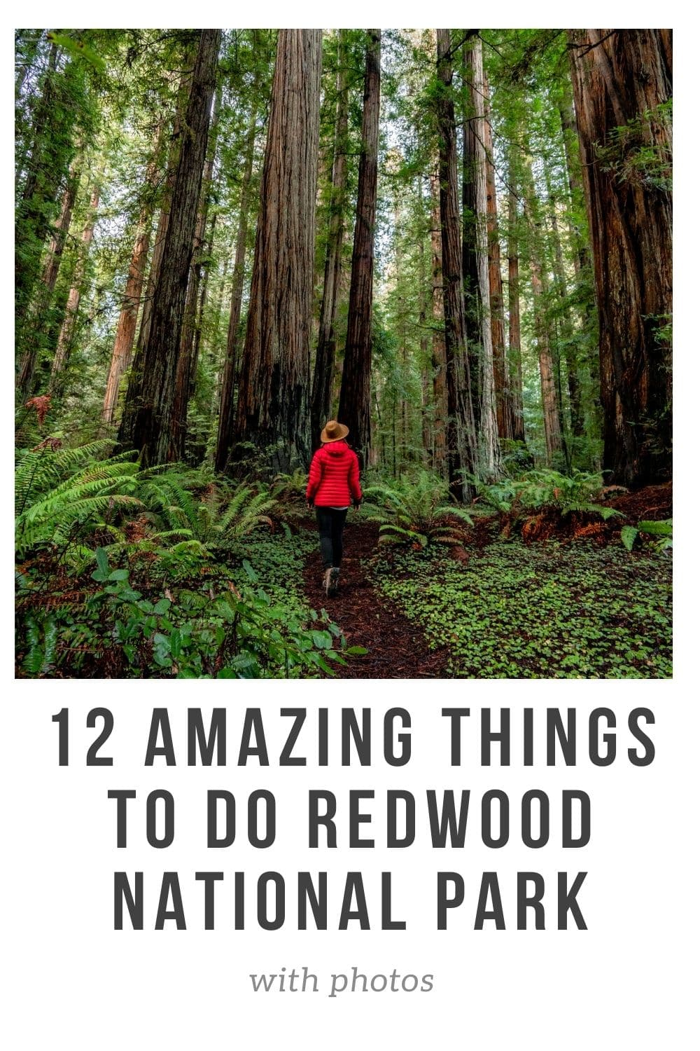 12 amazing things to do redwood national park