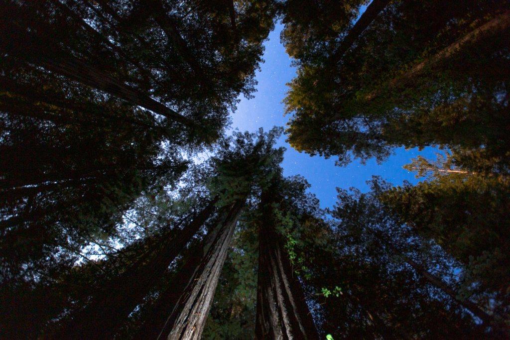 redwood national park night