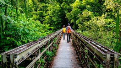 haleakala national park bamboo forest maui, hawaii