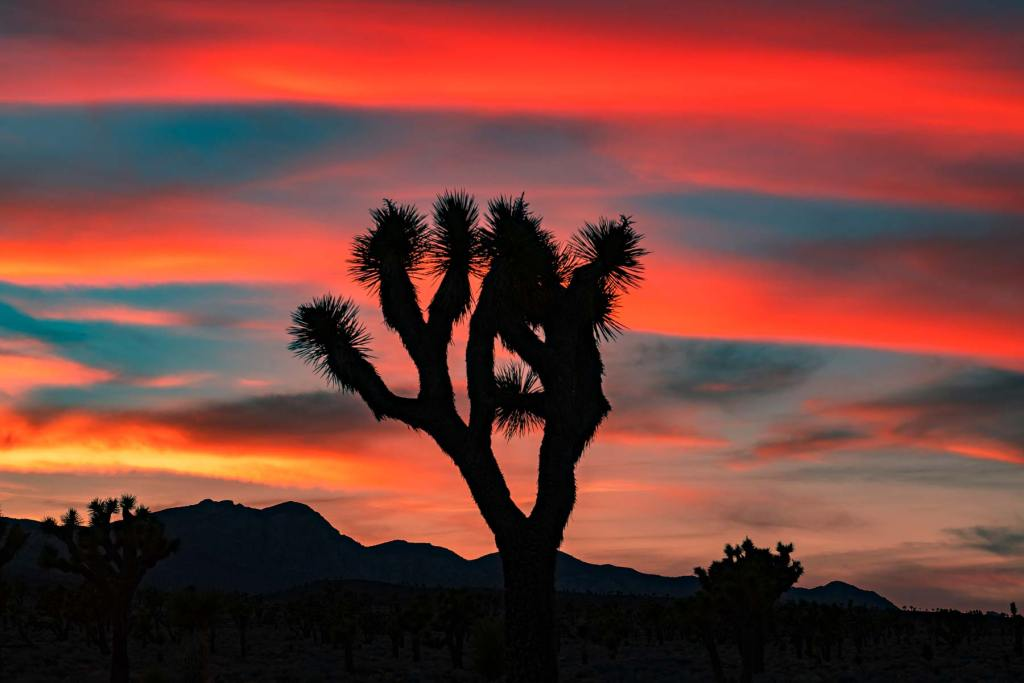 Lee Flat Joshua Tree Forest Death Valley