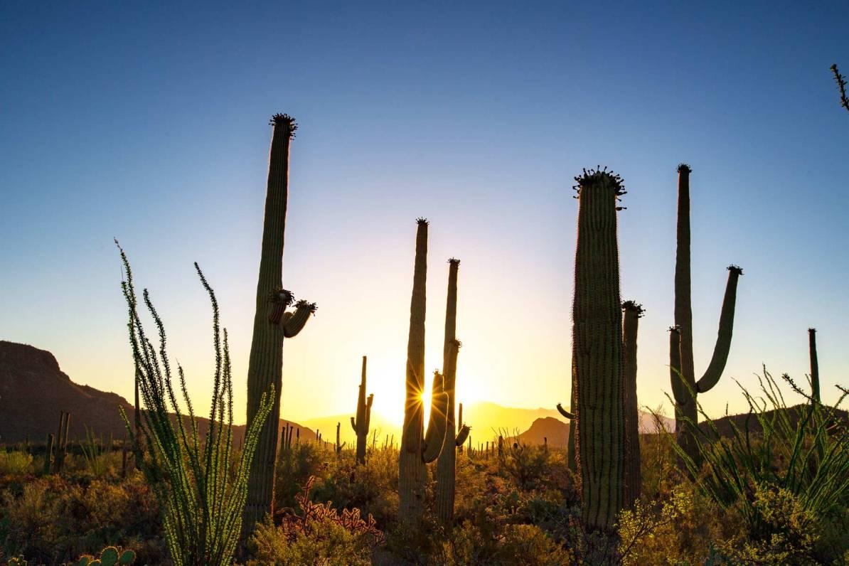sunset saguaro national park arizona