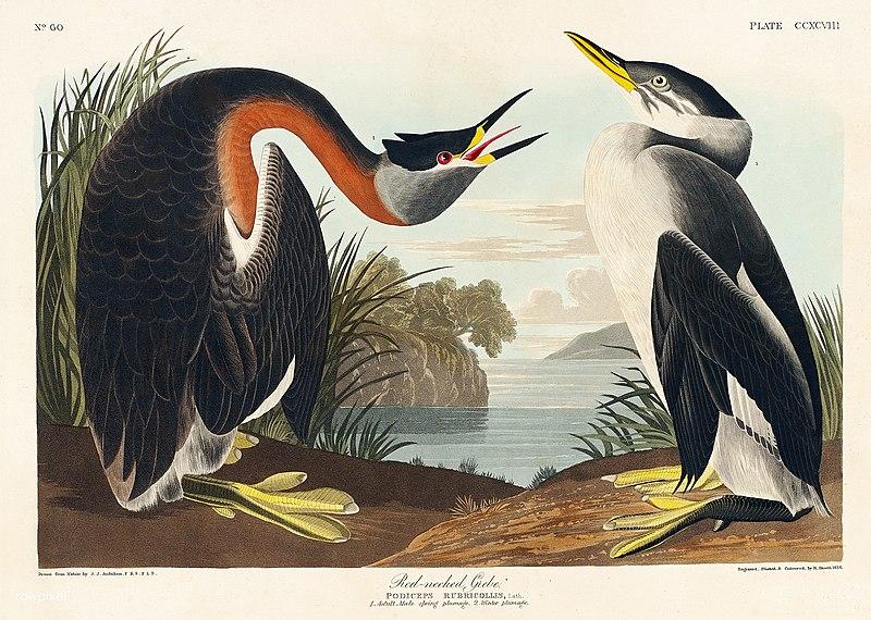 john j audubon, famous environmentalist