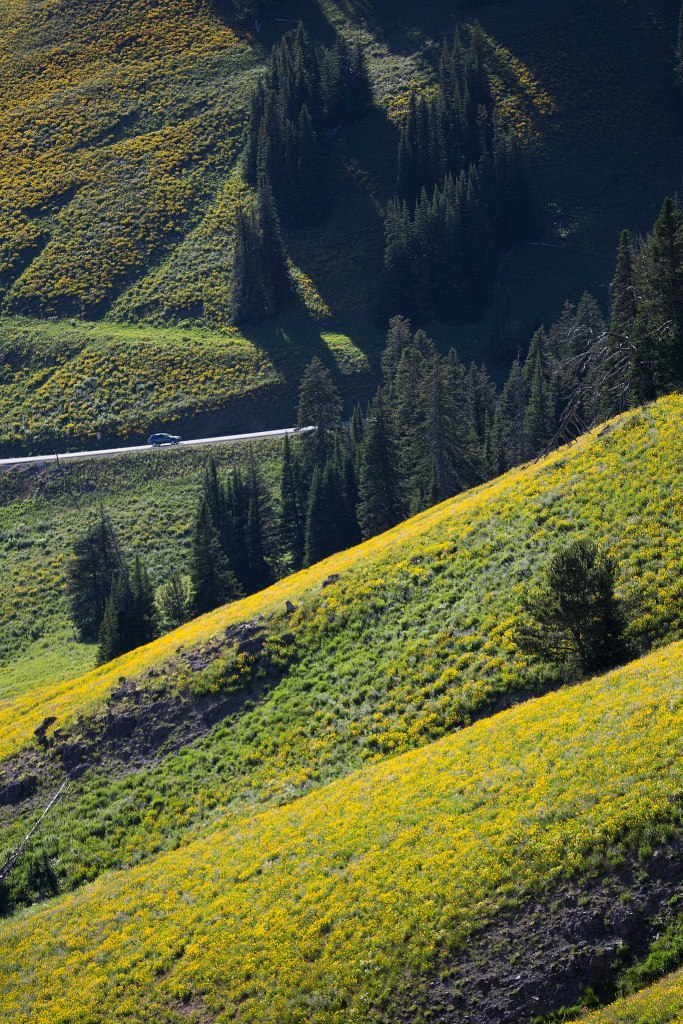 Yellowstone National Park Facts include that Yellowstone has the highest elevation in North America.