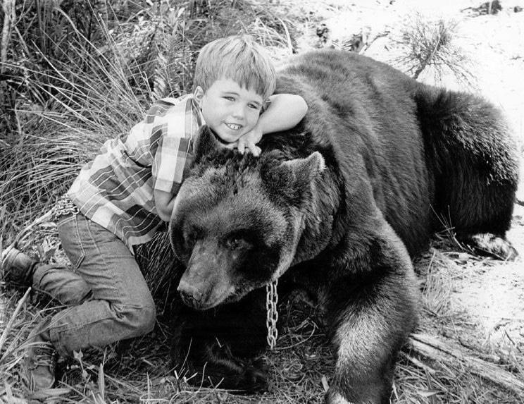 Gentle Ben was filmed in Everglades National Park   National Parks In Television Shows